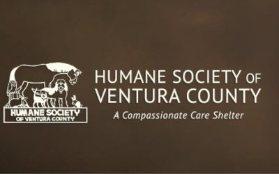 Humane Society of VC Accepting Pets from Evacuated Families